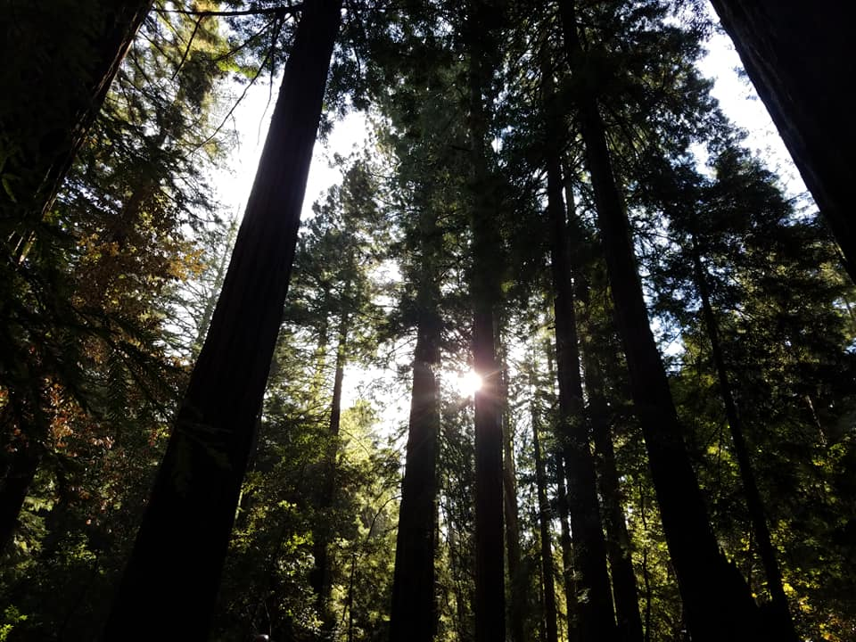 Top Things to do in San Francisco Muir Woods