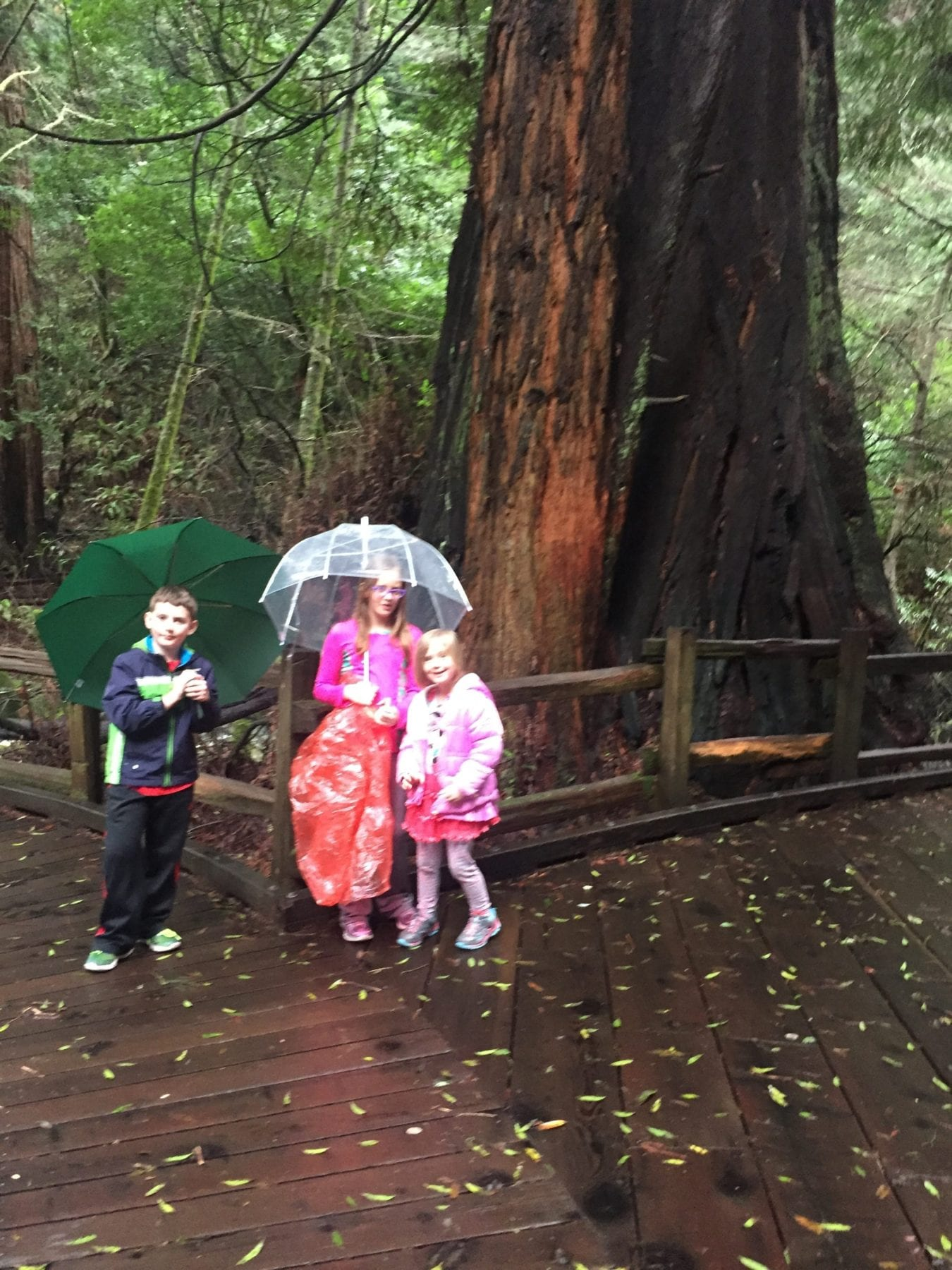 Muir Woods with kids
