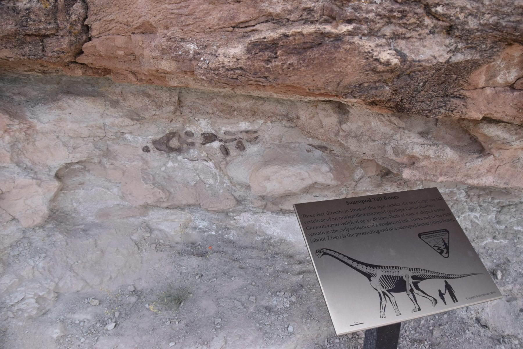 Dinosaur Trails in Moab